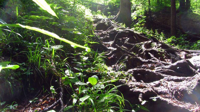 Auf dem Jägersteig hoch zum Geigelstein