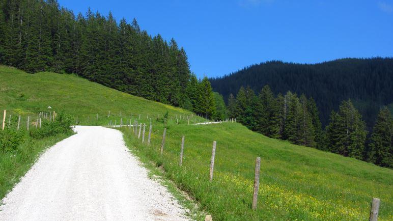 Bergab geht es eher gleichförmig über die Forststrasse