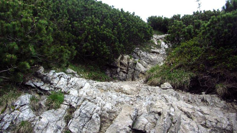 Steil hinauf auf den letzten Metern durch die Latschen