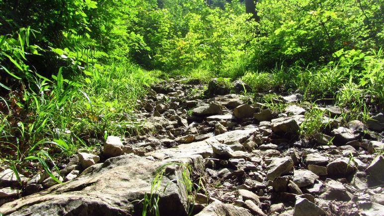 Der Jägersteig sieht doch viel einladender aus als der Forstweg