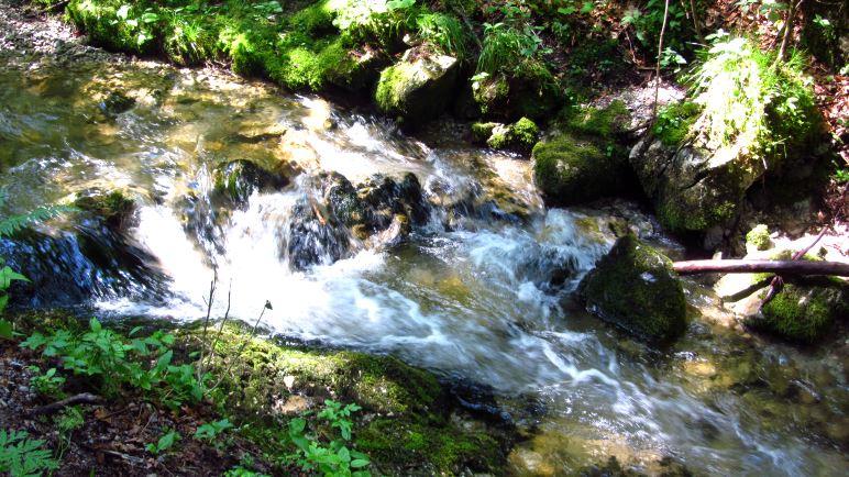 Der Weg führt entlang des Hachelbachs durch den Wald