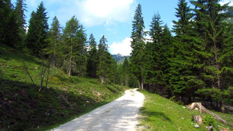 Der Weg zur Rontalalm führt unspektakulär über die Forststraße
