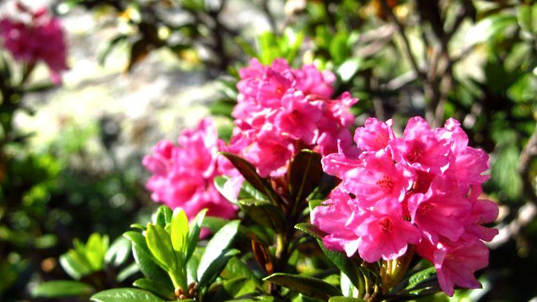 Nur ein Ausschnitt aus der Blumenpracht