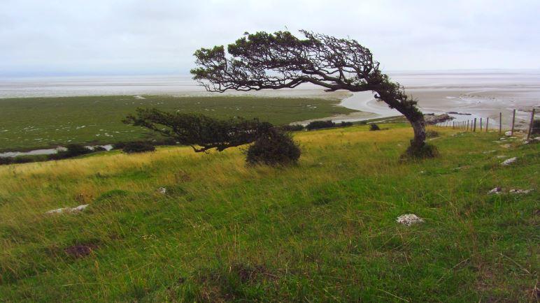 Diesem Baum hat der Wind besonders zugesetzt