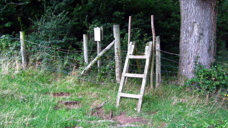 Über die Leiter geht es von der Weide in den Wald