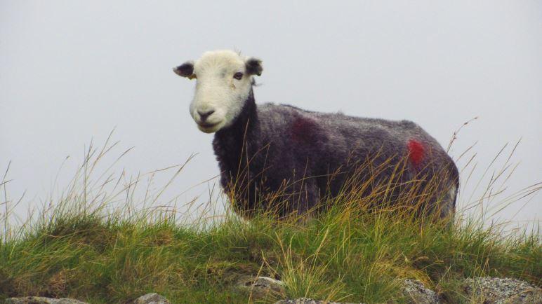 Hier trifft man deutlich mehr Schafe als Menschen