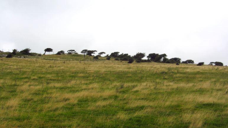 Vom Wind verbogene Bäume sieht man an der Ostseite des Humphrey Head überall