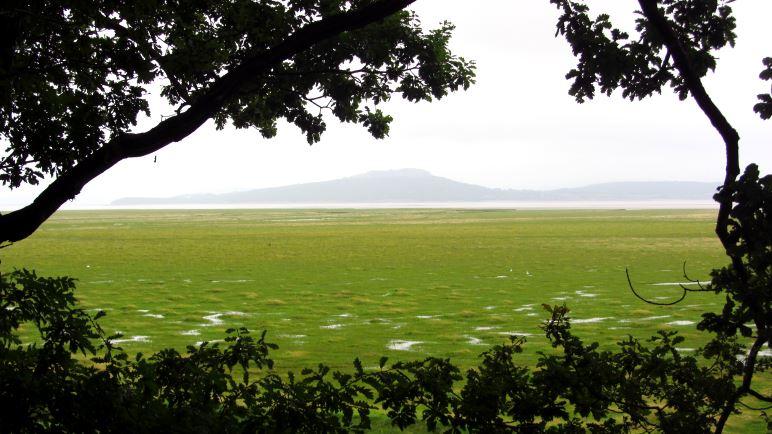 Blick aus dem Wald auf die Morecombe Bay