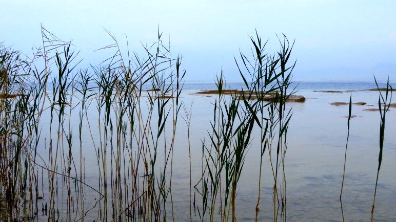 Durch das Seegras Richtung Norden zur Spitze der Halbinsel Sirmione