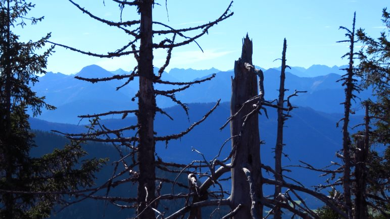 Trotz Bäumen: Auch der Blick vom Geierstein nach Süden ist beeindruckend