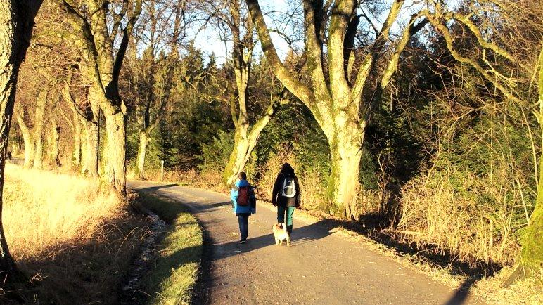 Auf der Allee vom Forsthaus zum Waldparkplatz