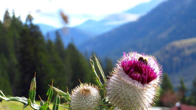 Alpenblumen auf dem Aufstiegsweg