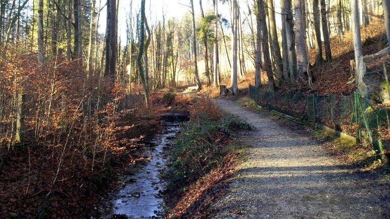 Am Martelsgraben entlang durch den Tutzinger Wald