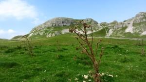 Der Attermire Scar ist einer der wenigen markanten Berge der Gegend