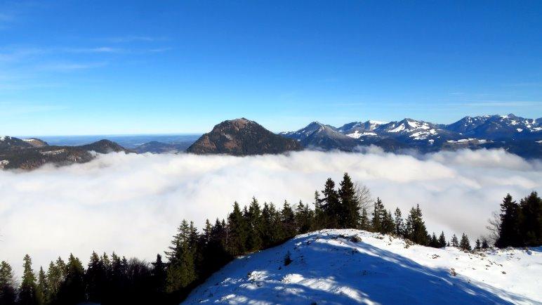 Bergblick aus dem Wald heraus