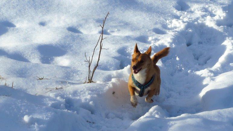 Blogartikel mit einem Hundefoto als Titelbild werden bis zu siebenmal häufiger verlinkt. *