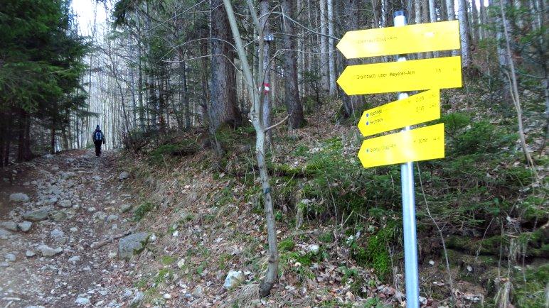 Statt der Forststraße nehmen wir den steinigen Waldweg