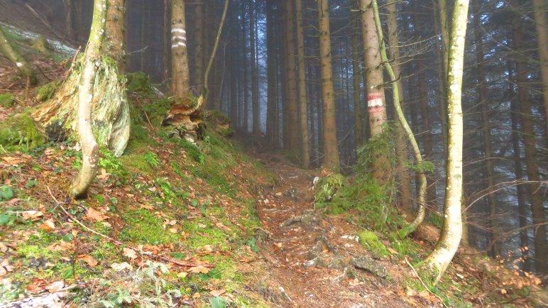 Auf dem Steig im Wald