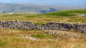 Die Landschaft der Yorkshire Dales - viele Grasberge, von Steinmauern durchzogen