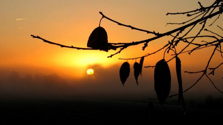 Warme Goldtöne, aber der Nebel macht diesen herbstlichen Sonnenaufgang kühl