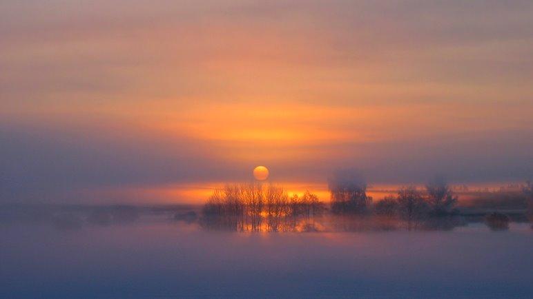 Der Morgennebel hängt über dem Moos. Ein Märzfoto