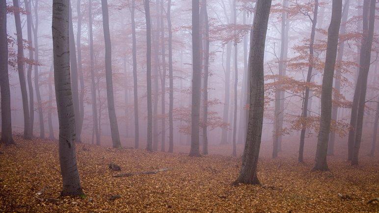 Auf einer Wanderung durch Deutschland - Foto: Jens Franke