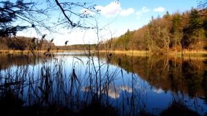 Ufergewächse am Kautsee