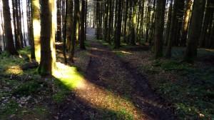 Ein Lichtstrahl im Wald