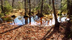Auch zwischen den Seen gibt es immer wieder kleine Wasserflächen