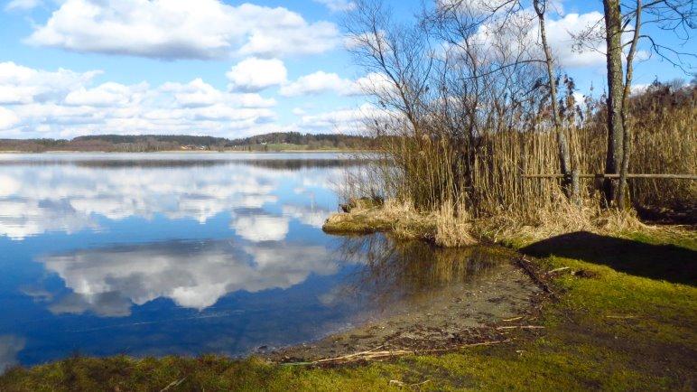 Am Südufer des Pelhamer Sees verlassen wir die Straße und gehen ins Zentrum des Naturschutzgebiets