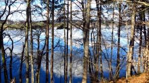 Zwischen den Bäumen hindurch sehen wir auf den Pelhamer See