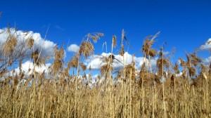 Seegras unter weiß-blauem Himmel