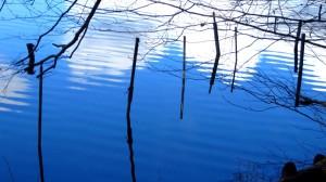 Am Ufer des Pelhamer Sees