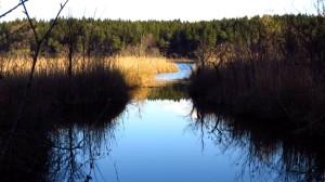 Ufergras am Hartsee