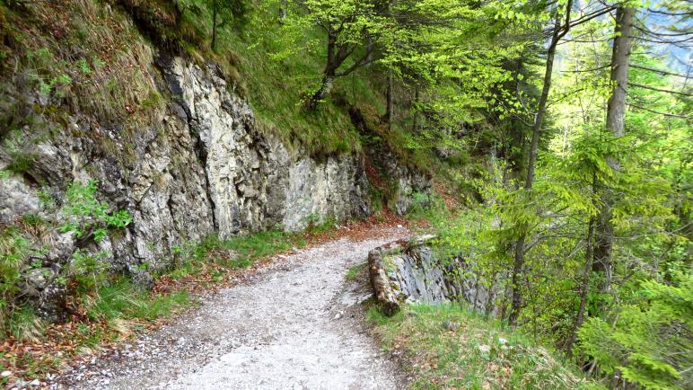 Bergab vom Sillberghaus zur Straße im Ursprungtal