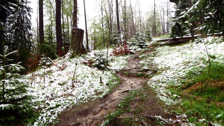 Der erste Schnee, die ersten Baumstümpfe