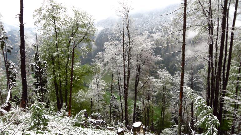 Die schneebedeckten Bäume und die Wolken erzeugen eine mystische Stimmung