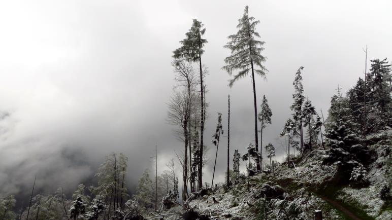 Wolkenfetzen zwischen Waldresten