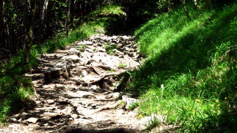 Den breiten Fahrweg kann man oft über schöne Bergsteige verlassen