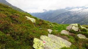Mal wieder grün zwischen all dem Fels und Schnee