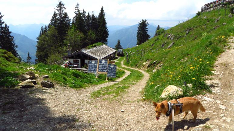 Die kleine Moar-Alm, oben sieht man schon die Enzianhütte. Vorne Berghund Mikki
