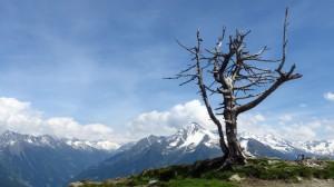 Nochmal das Baumskelett vor grandioser Bergkulisse