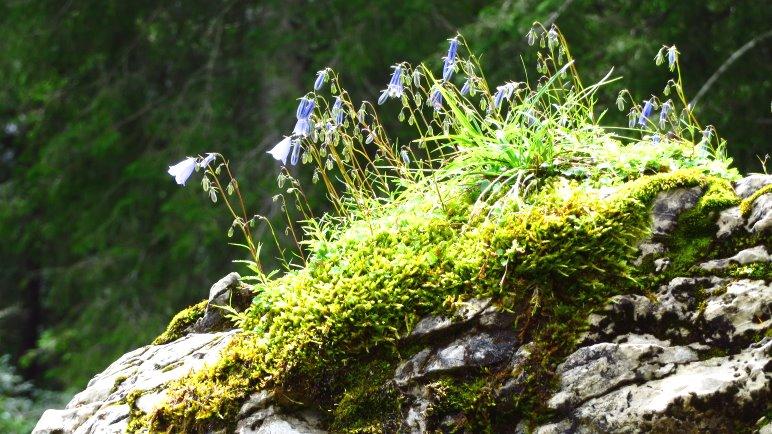 Blumen erobern einen Felsen im Wald