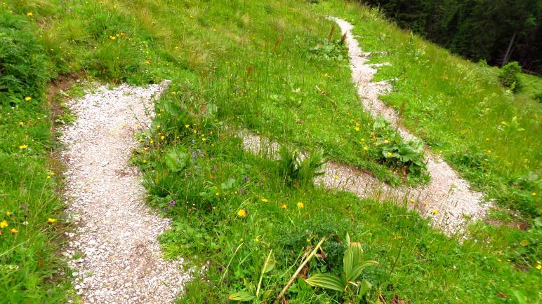 Der Wiesenweg von der Strindenalpe hinunter Richtung Haldensee