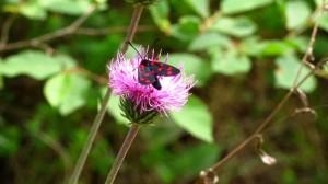 Noch ein Schmetterling! Schick, im kurzen Schwarzen mit roten Punkten