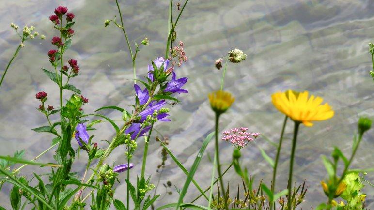 Uferpflanzen am Vilsalpsee
