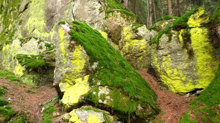 Gelb und grün bewachsene Felsbrocken liegen neben dem Weg