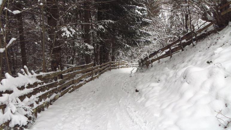 Von Mitterleiten aus führt der Weg erst einmal ein paar Meter bergab