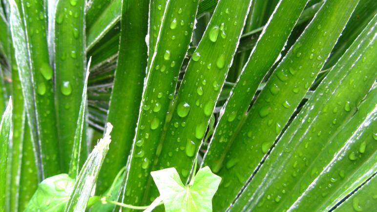 Regen am Gardasee? Besonders in den Oster- und Pfingstferien sollte man auch mit Regentagen rechnen.