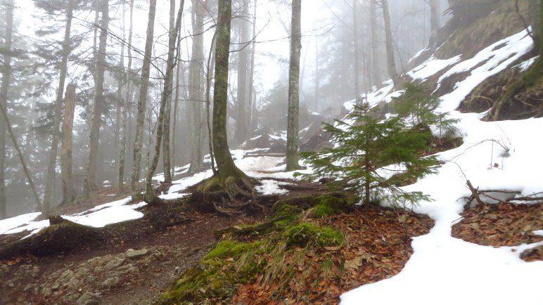 Erste Schneeflecken zeigen sich und noch hängt der Nebel zwischen den Bäumen
